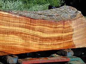 Cut Koa Log