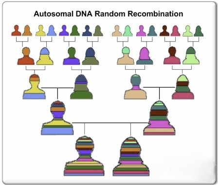 atna-recombination